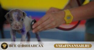 Открыть свою ветеринарную аптеку с нуля: стоимость и инструкция